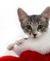 Santa cat Christmas card
