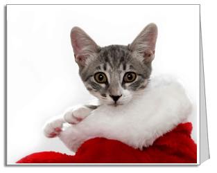 kitty xmas card1