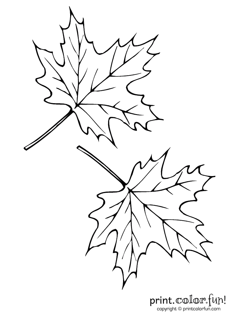 Two Autumn Leaves Coloring Page Print Color Fun