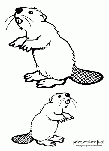 Two Beavers Coloring Page