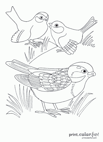 Three cute birds coloring page - Print. Color. Fun!