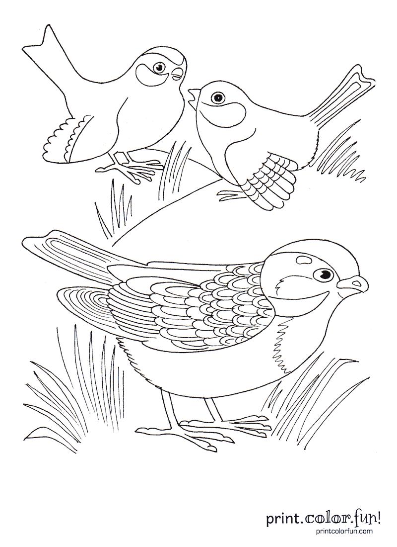 Three cute birds coloring page