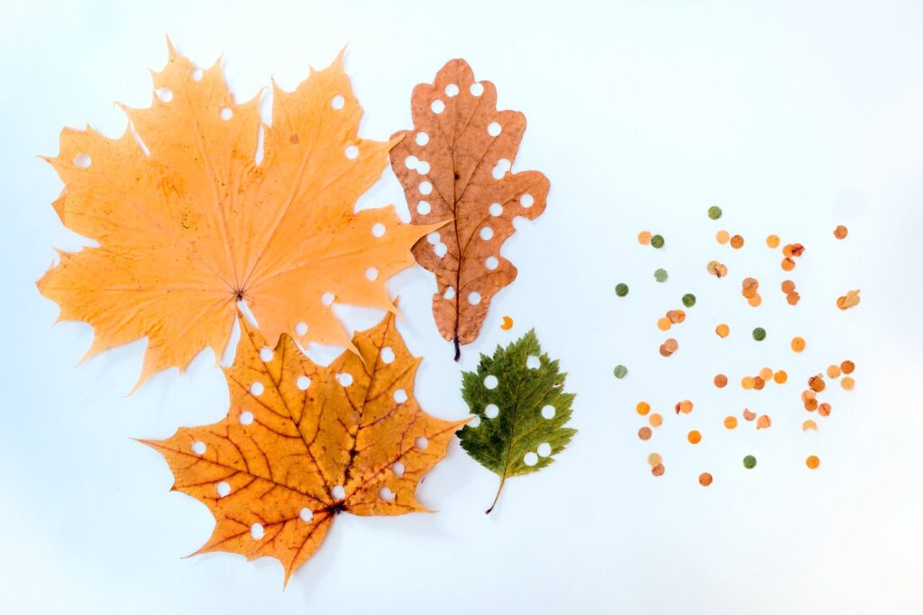 DIY craft projects with dried leaves - Photo by kramyninasvetlana via Twenty20
