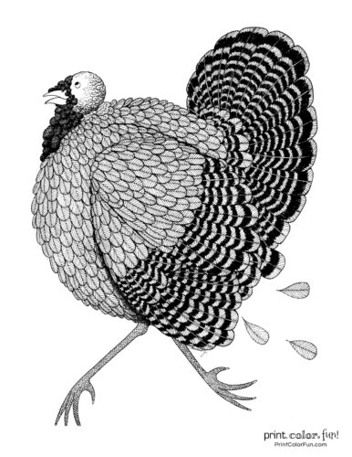Detailed feathered turkey coloring page