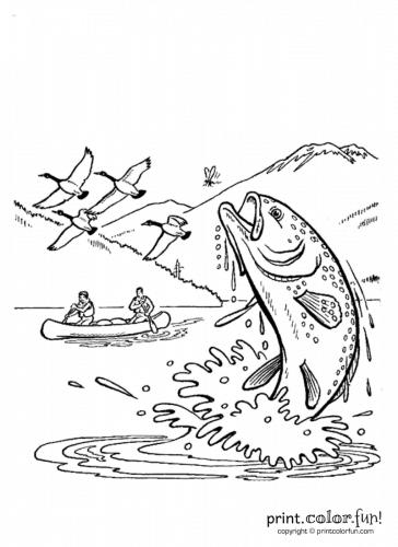 Fish-in-stream