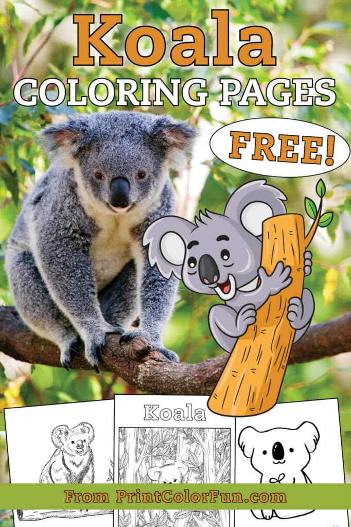 Free cute Koala coloring pages at PrintColorFun com