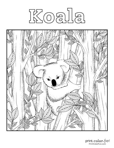 Free cute koala coloring pages (2)