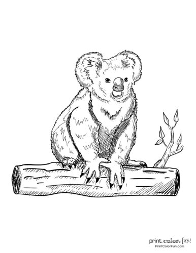 Free cute koala coloring pages (3)