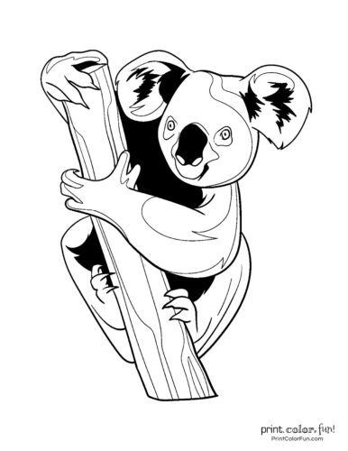 Free cute koala coloring pages (4)