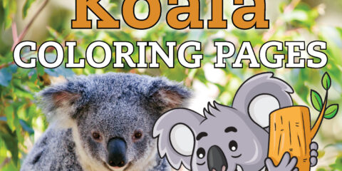 Get free cute Koala coloring pages