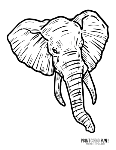 Realistic elephant coloring pages (1)