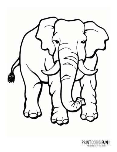 Realistic elephant coloring pages (2)