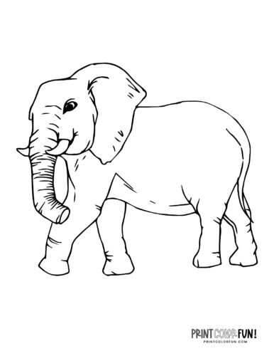 Realistic elephant coloring pages (3)