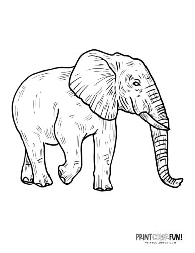Realistic elephant coloring pages (4)