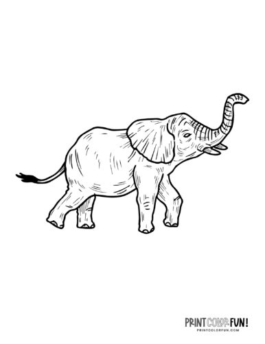 Realistic elephant coloring pages (5)
