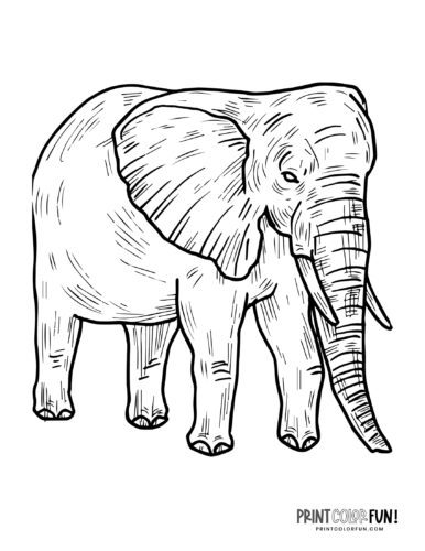 Realistic elephant coloring pages (6)