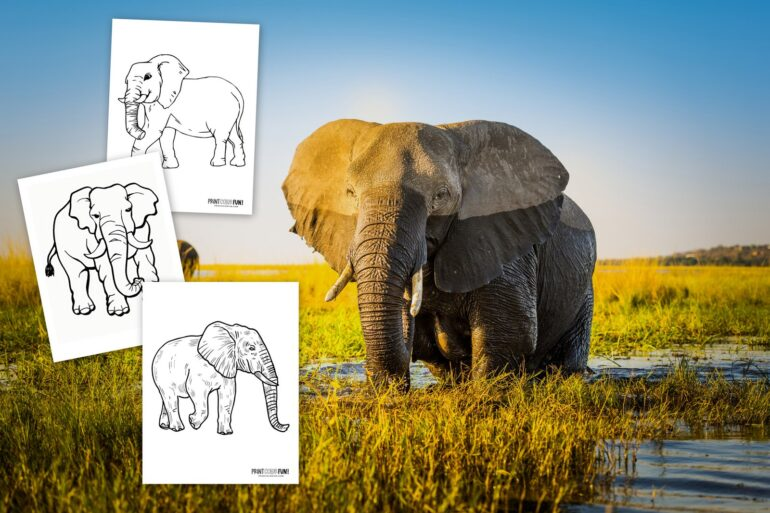 Realistic elephant coloring pages