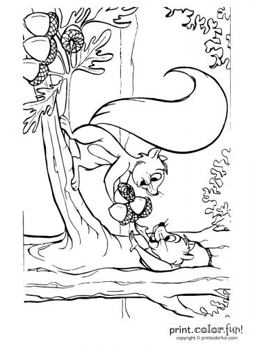 Squirrels-with-acorns