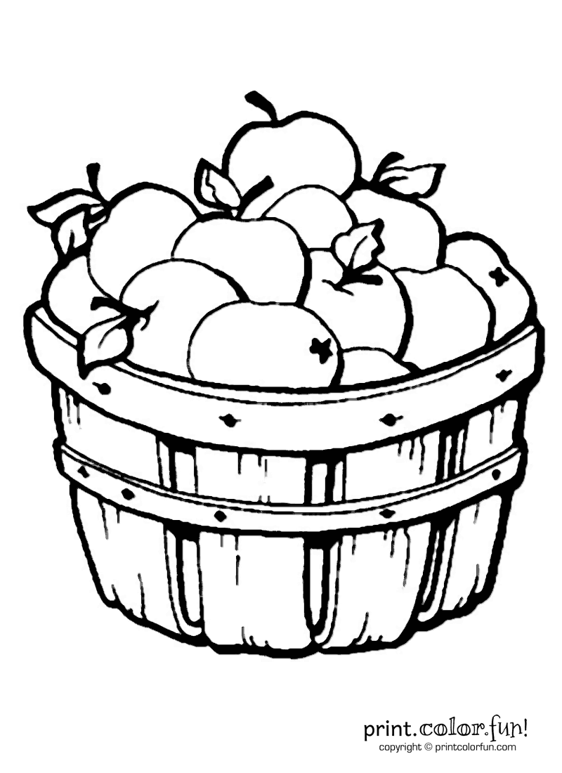 apples in a barrel coloring page print color fun