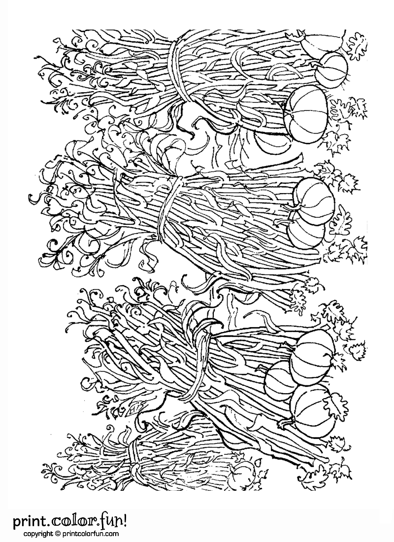 corn stalks coloring pages - photo#25