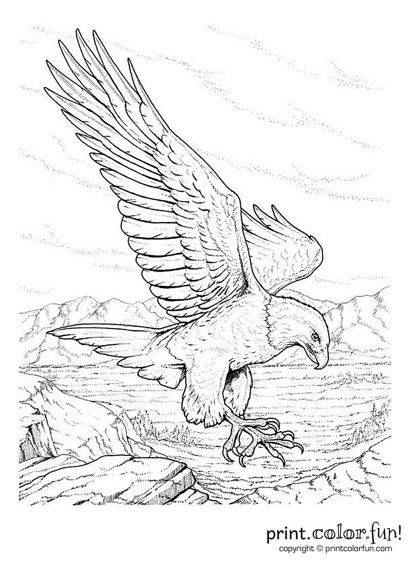 Bald eagle coloring page print color fun for Bald eagle coloring pages printable