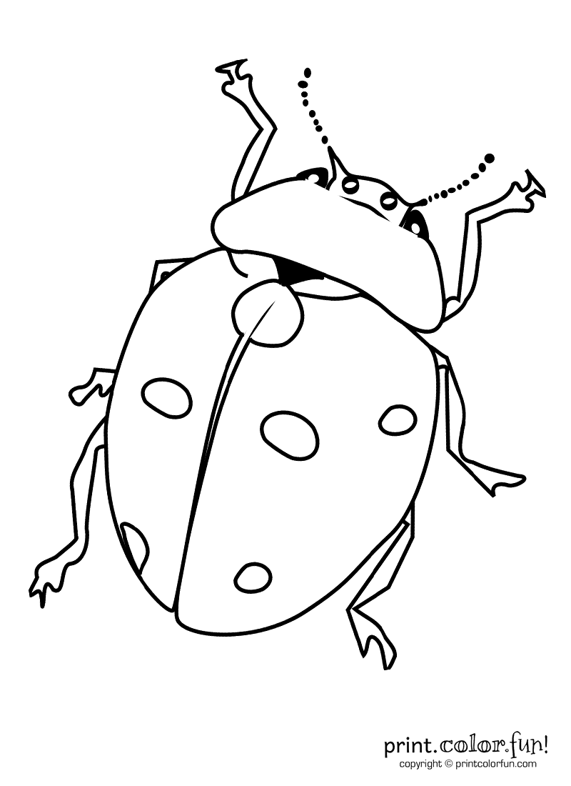 A bug coloring page  Print Color Fun