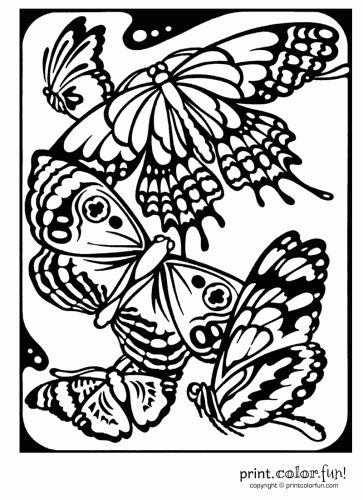 Butterflies Print Color Fun