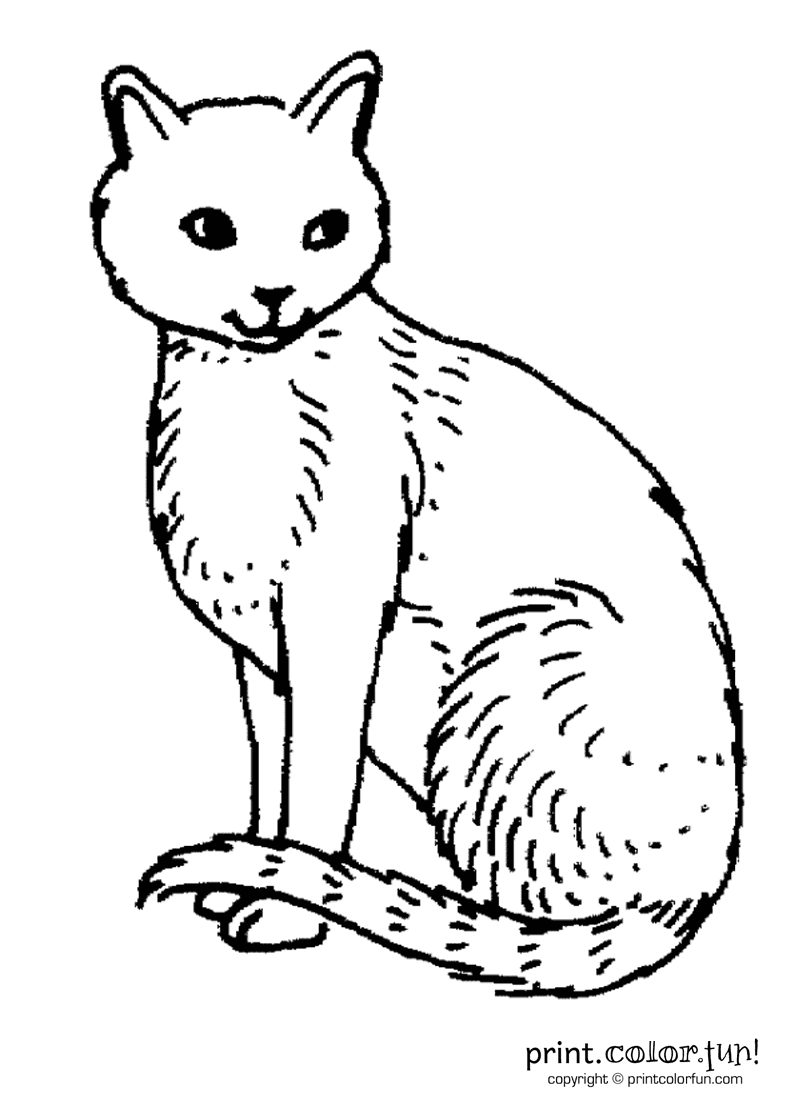 cat coloring page print color fun