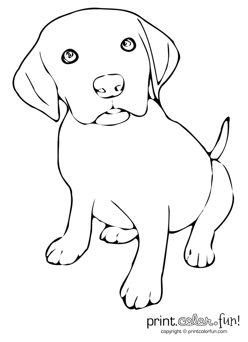coloring pages of a puppy - cute puppy coloring page print color fun