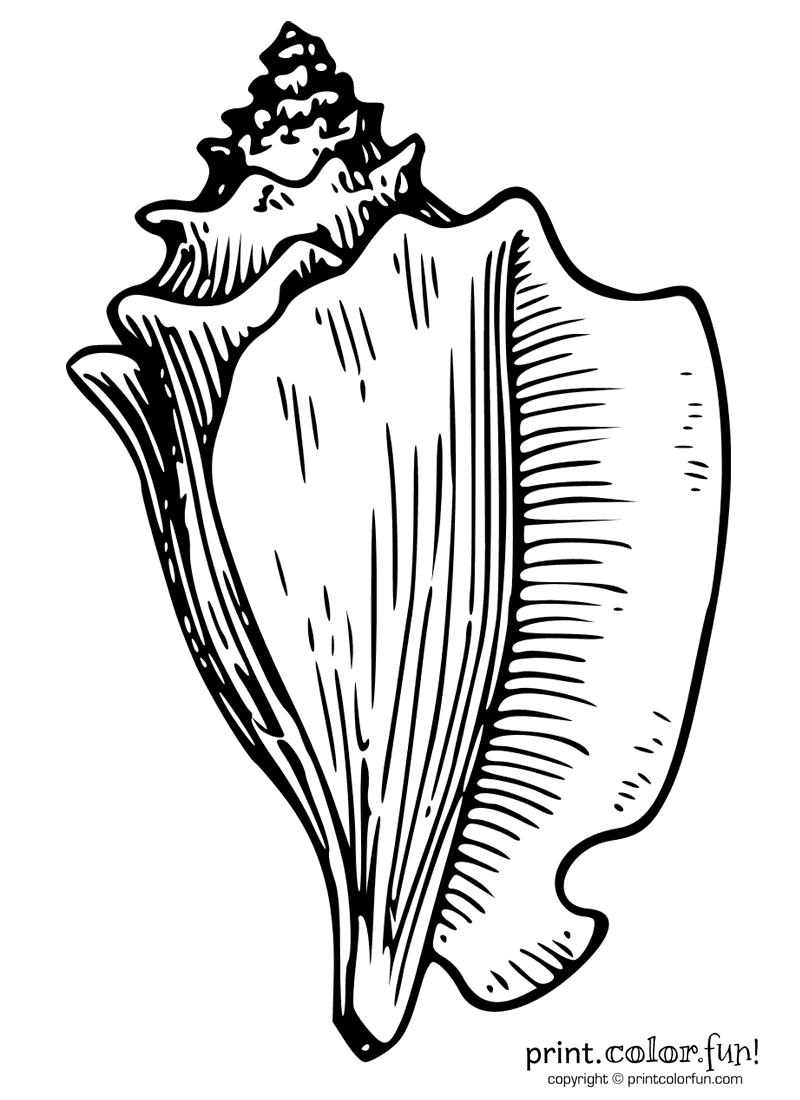 Conch shell coloring page Print