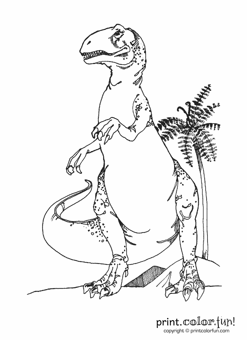 dinosaur t rex coloring page print color fun