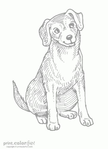 dog listening low ink