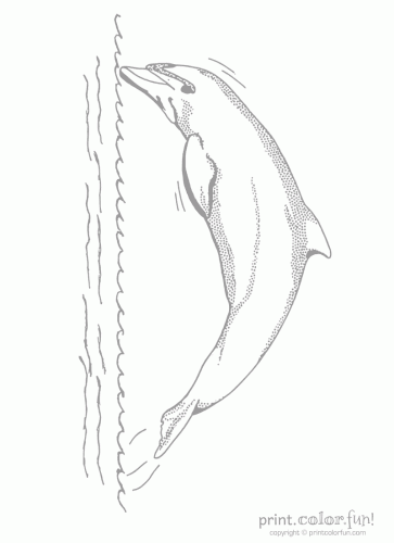 dolphin low ink