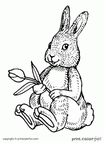 Rabbit With A Flower Coloring Page Print Color Fun