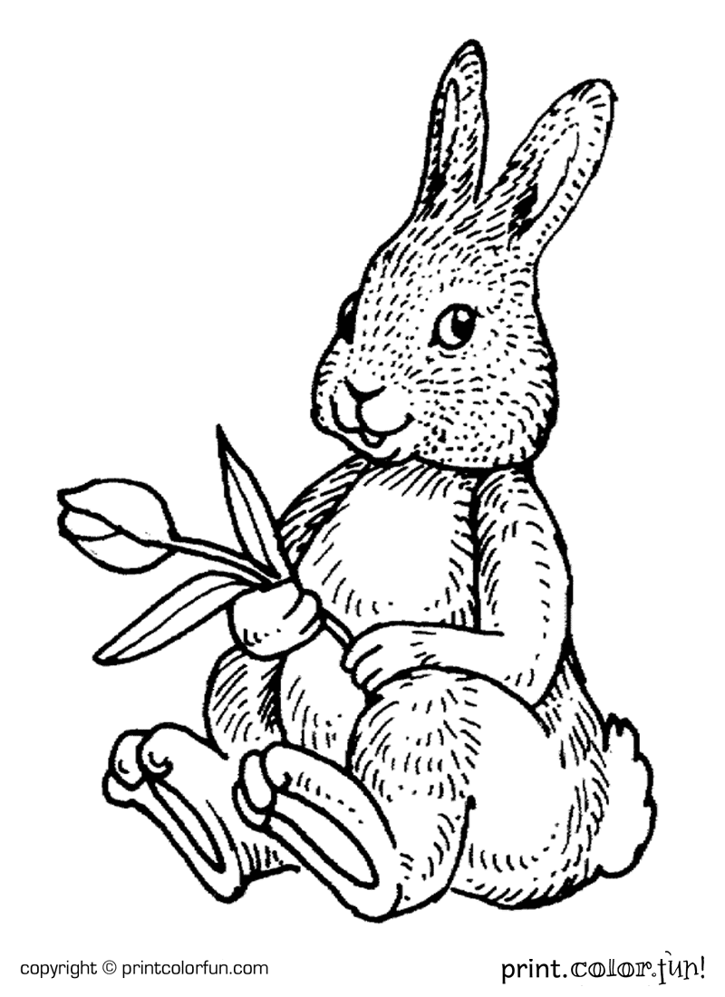 Rabbit with a flower coloring page
