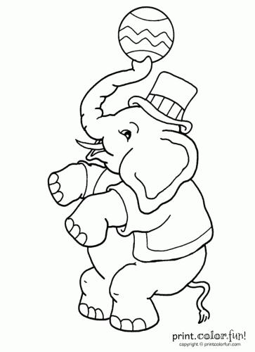 Circus elephant Boy coloring page Print Color Fun