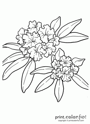Rhododendron Flower Coloring Page Print Color Fun
