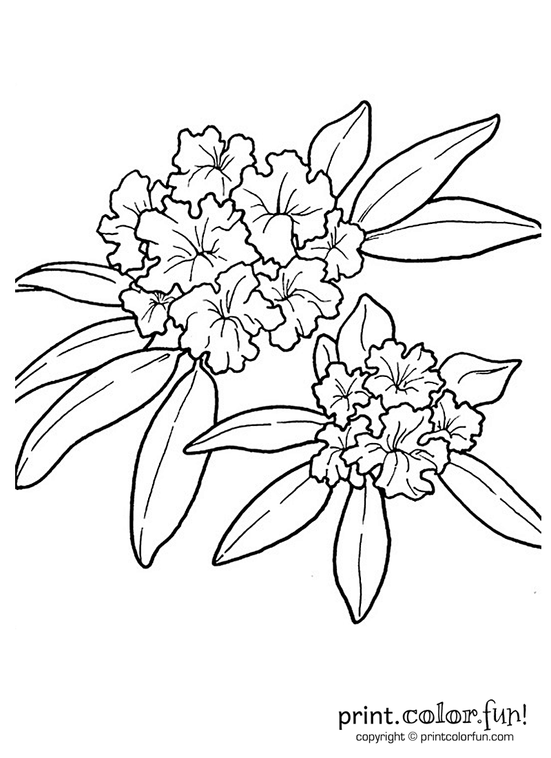 Rhododendron flower coloring page
