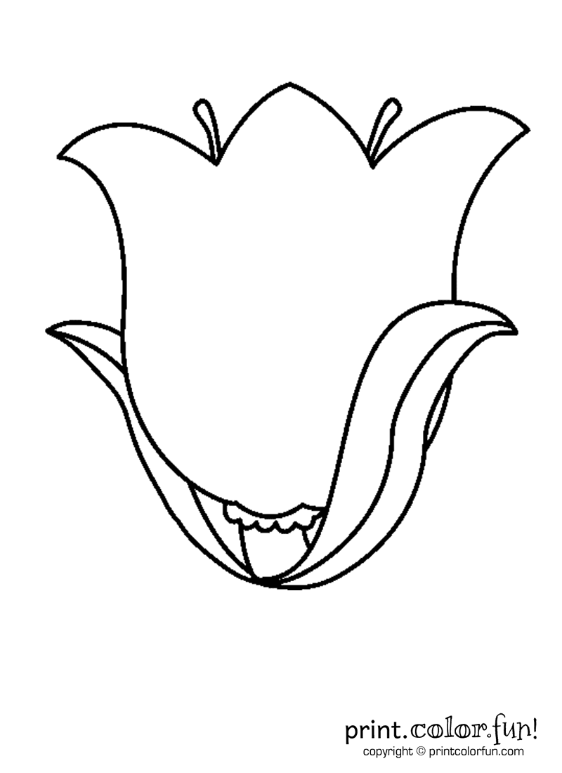 tulip flower coloring page print color fun