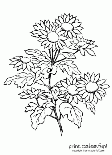 Daisy flowers coloring page - Print. Color. Fun!