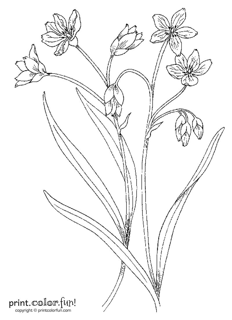 Flowers And Stems Coloring Page