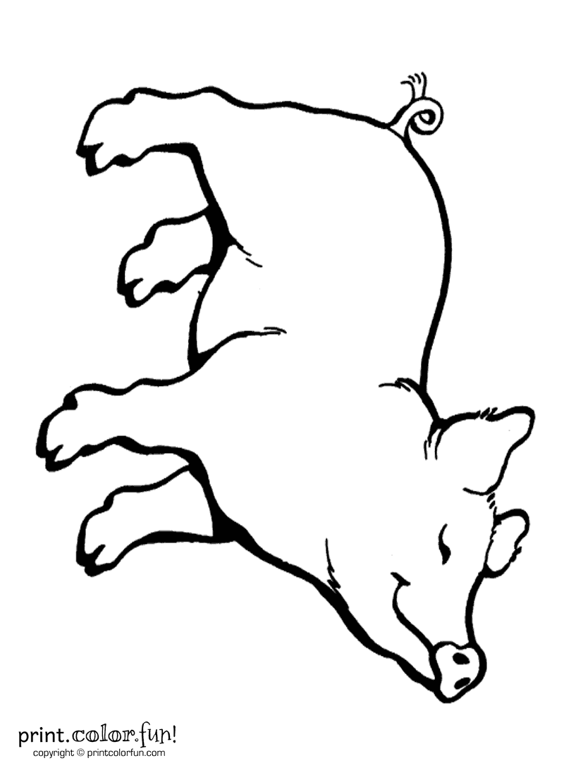 Happy pig coloring page Print Color Fun