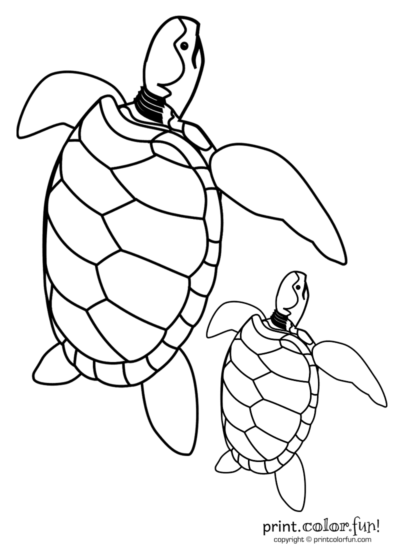 baby turtle u0026 dad coloring page print color fun