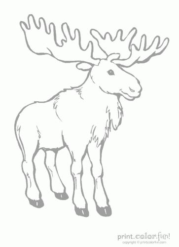 moose low ink