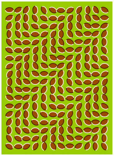 optical illusion almonds
