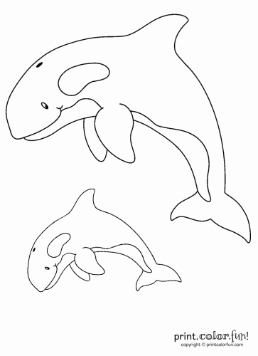 Two orcas coloring page Print Color Fun