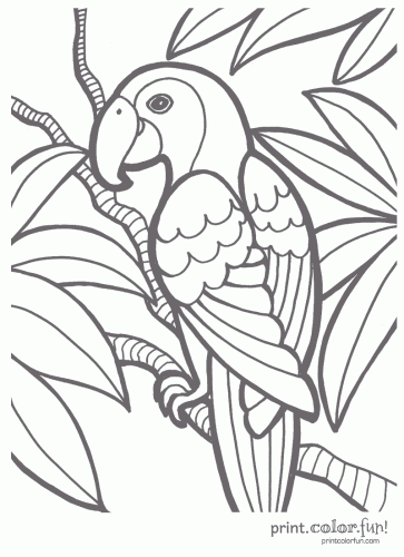 Tropical Parrot Coloring Page Print Color Fun