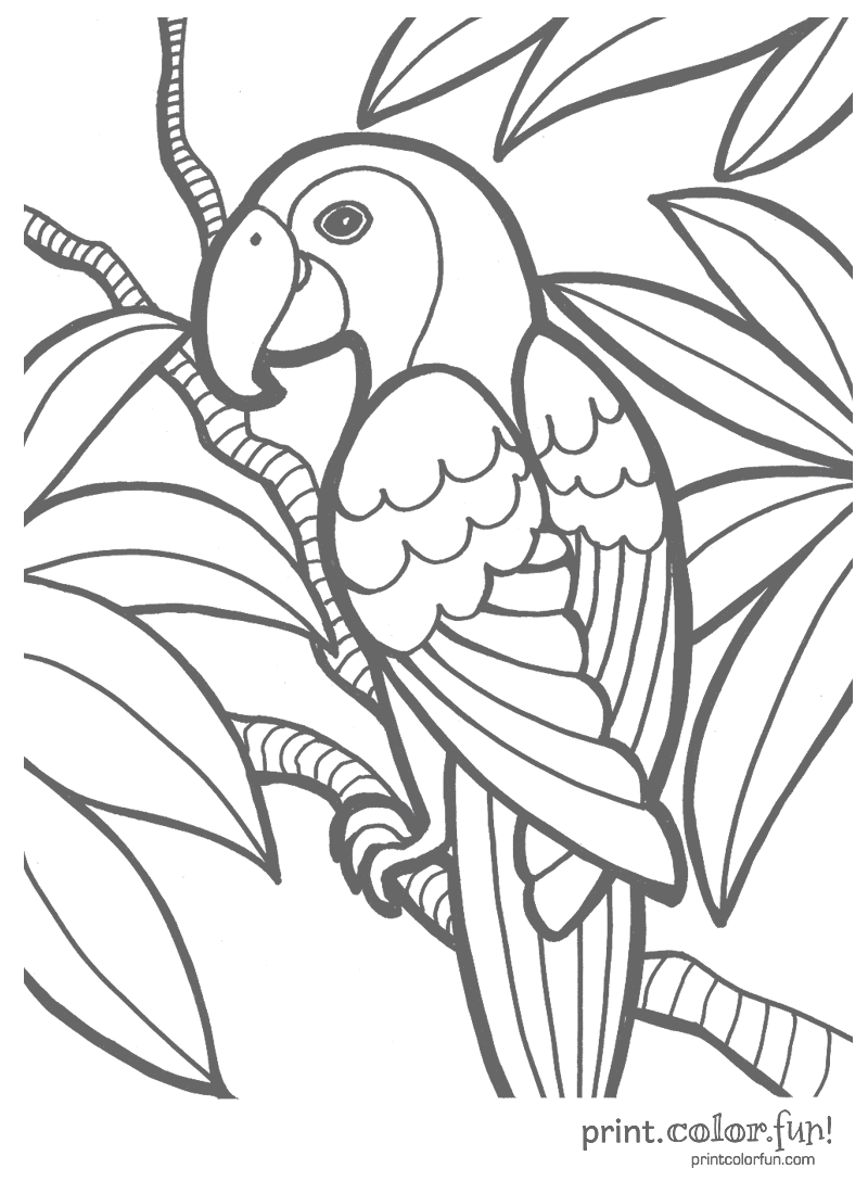 Tropical parrot coloring page Print Color Fun