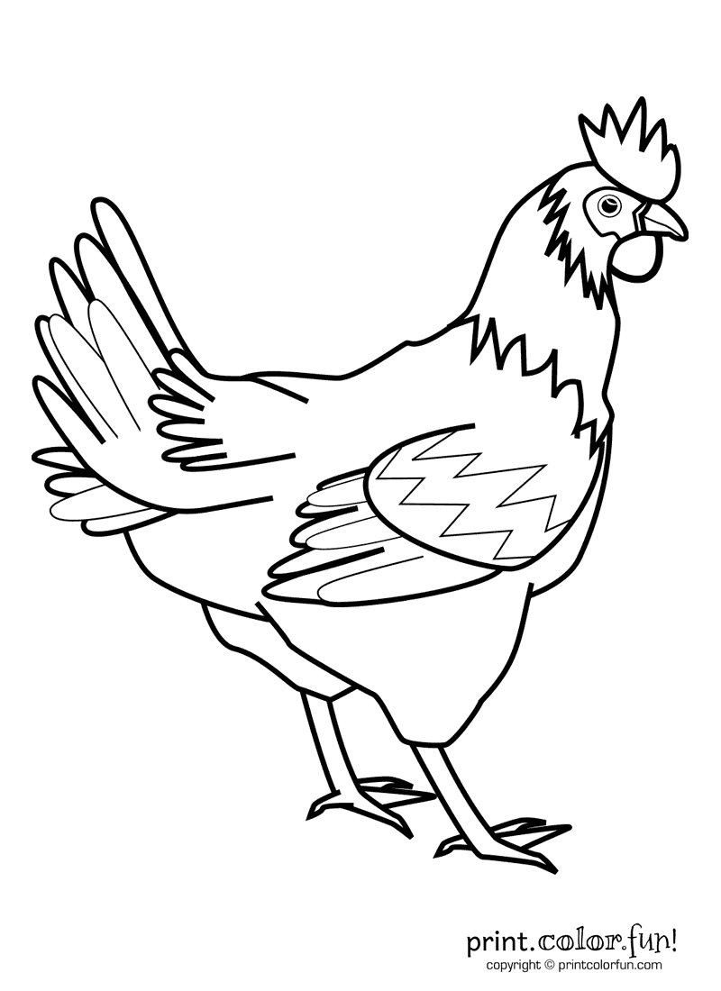 rooster coloring page print color fun