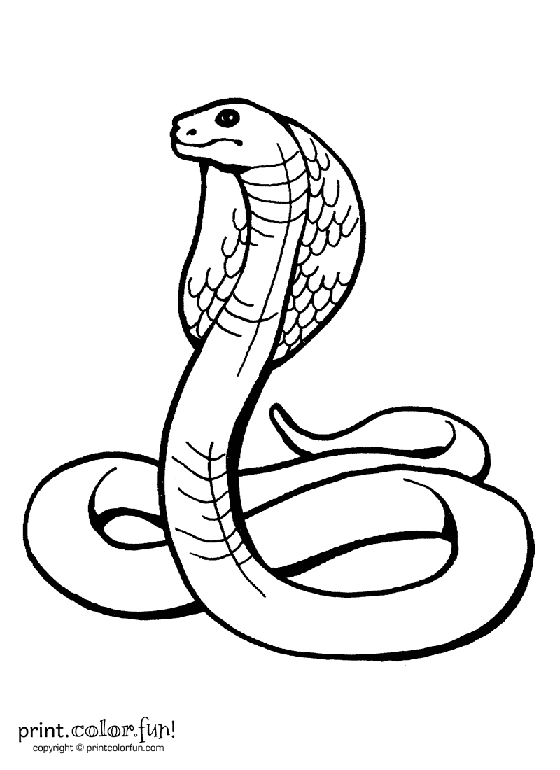 King cobra coloring page print color fun for Snakes coloring pages